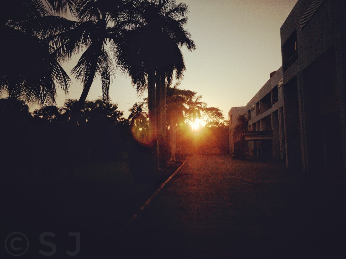 A Great Sunrise along with some beauty of the Palm Trees - Captured Using A Smartphone